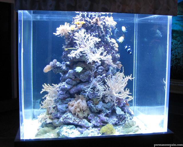 Square Fish Tank Flickr - Photo Sharing!