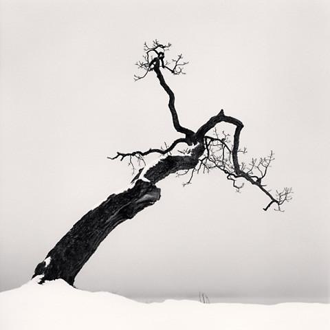 Kussharo Lake Tree, Study 4, Kotan, Hokkaido,by Michael Kenna 2007