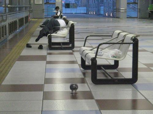 岡崎駅の鳩