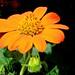 Orange flower by @Doug88888
