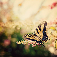 I move as slowly as I can, he said, ever since I heard about what a butterfly's wings can do...