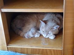 Cubby-cat