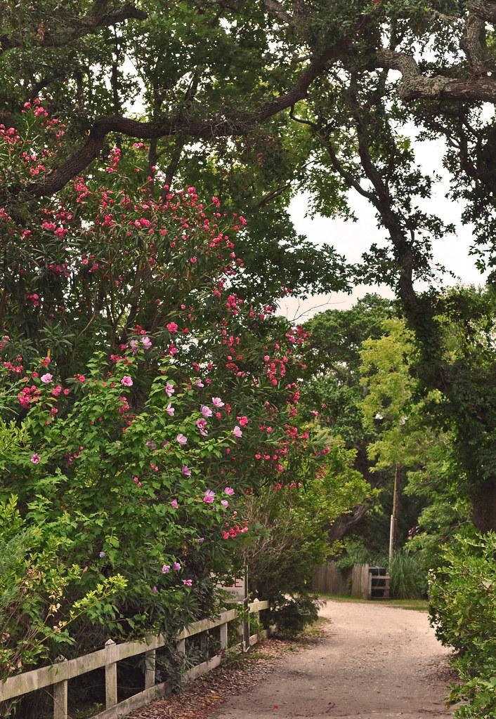 A Tidewater Gardener Ocracoke Village