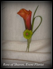 Boutonnieres: Mango Calla lily with button mum (close-up)