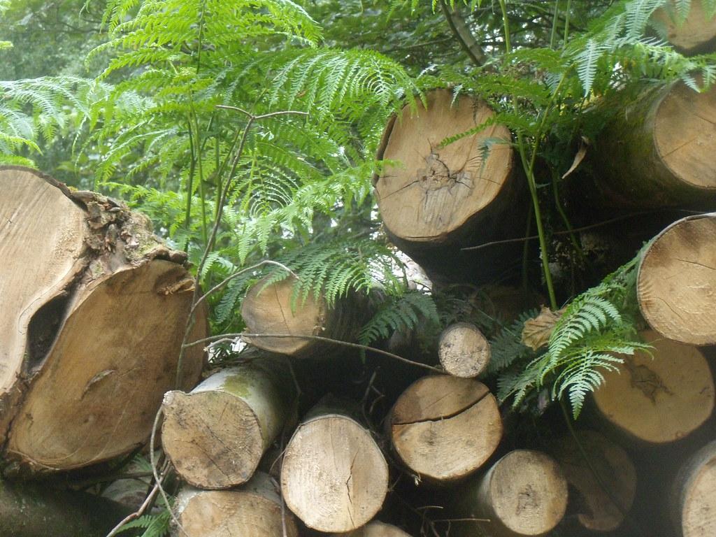 Logs and ferns Balcombe Round walk