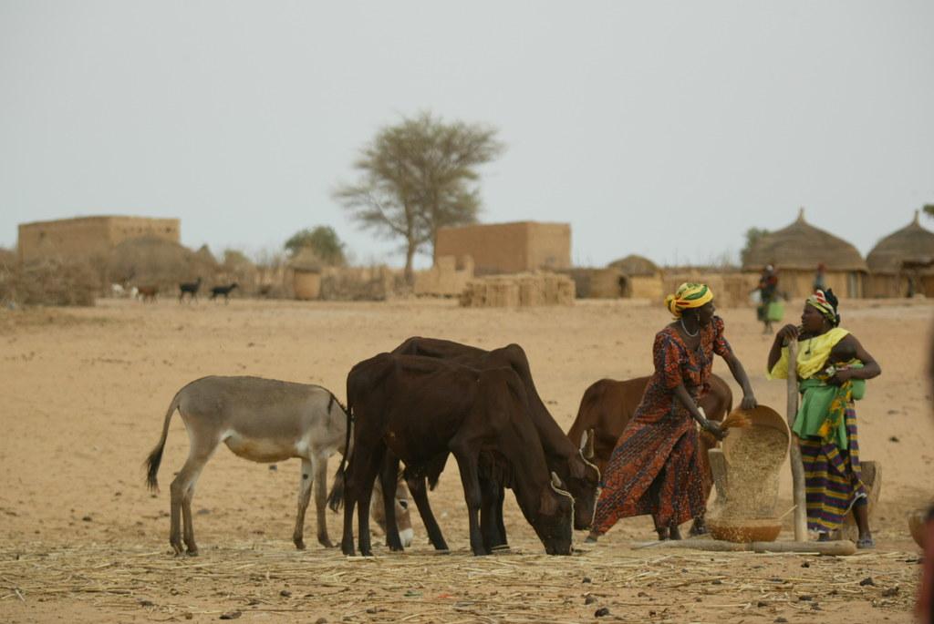Village women and livestock in Niger