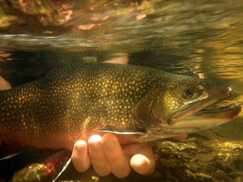 Fly Fishing Report From The Headwaters Of The Connecticut