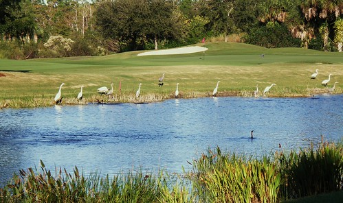 birds florida wildlife condoview thebrooks photostopost springruncc 11thgreen fairwaysandgreens