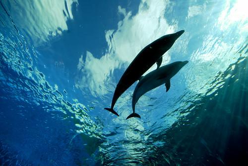 Cá heo là loài động vật duy nhất quan hệ tình dục vì sự sung sướng