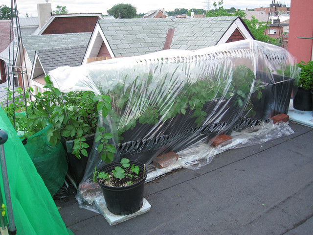 Rooftop Vegetable Garden 2010  Flickr - Photo Sharing!