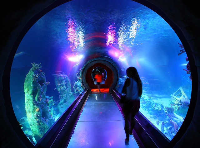 Sea Life Ocean Tunnel Flickr Photo Sharing