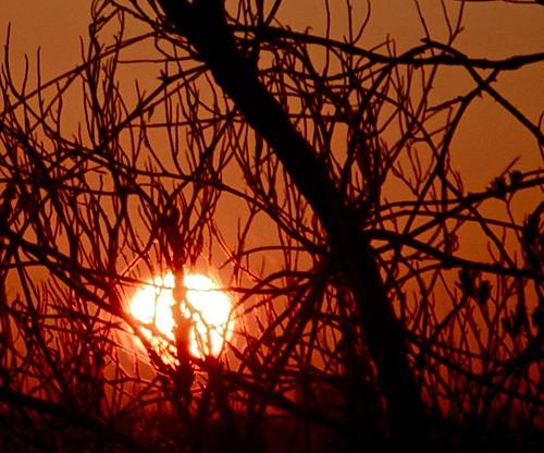 nature sunrise nikon florida sanibelisland 2010 soutwestflorida d5000 nikond5000