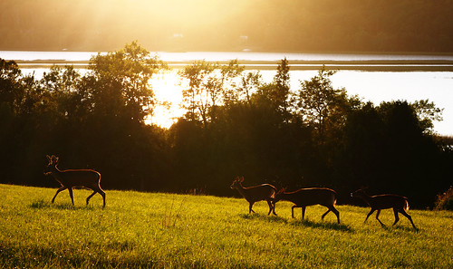 sunset field silhouette river deer newbrunswick kennebecasis