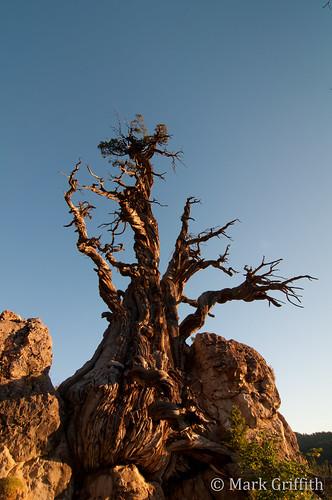 sunrise dawn utah logan juniper logancanyon dawnpatrol jardinejuniper