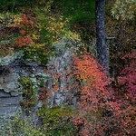 Ozark Autumn Color