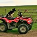 (1164) Border Collie & Quad