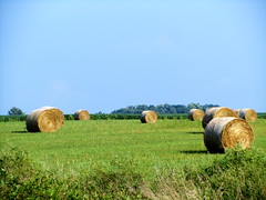 prairie, agriculture, farm, straw, hay, field, grass, plant, meadow, lawn, pasture, rural area, grassland,