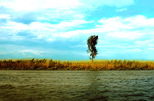 blue summer sky tree green nature grass clouds canon river russia delta volga steppe astrakhan