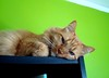Sleepy Oranj on the high shelf