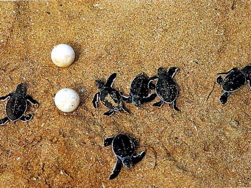 Mostra delle tartarughe 2010 la pi grande esposizione al for Terracquario per tartarughe