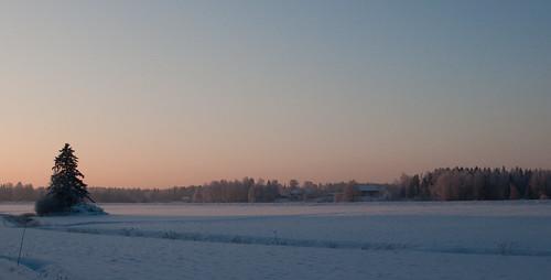 winter sunset landscape vista spruce