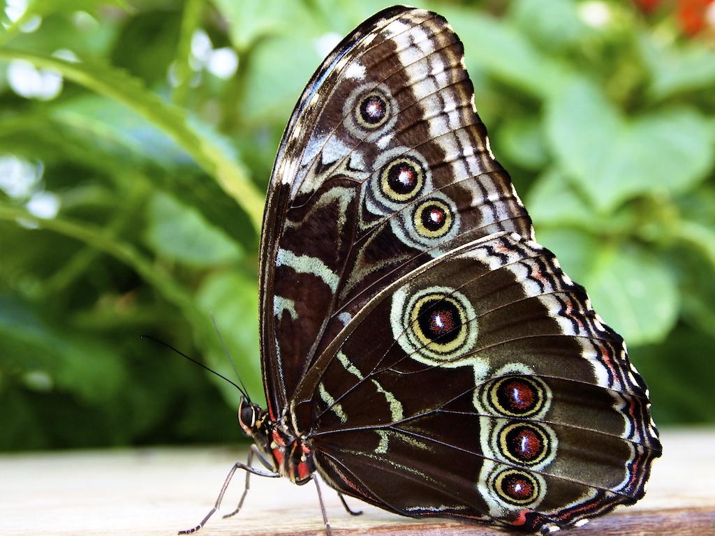 Butterfly Garden: Boston Museum Of Science