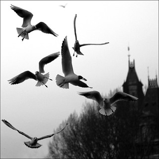 Waiting for Hitchcock ~ The Birds ~ Paris ~ MjYj | by MjYj ~ IamJ