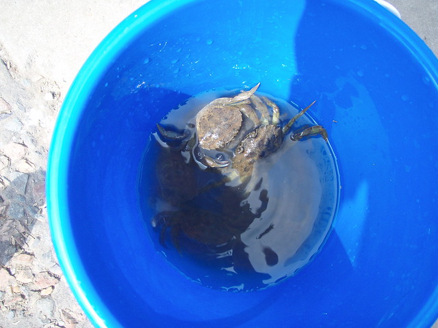 Ollie's crabs