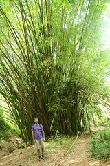 woodland, shrub, bamboo, soil, grass, tree, plant, herb, flora,