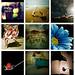 9 primeros Concursos especiales by Fotos con Corazon y Pasion