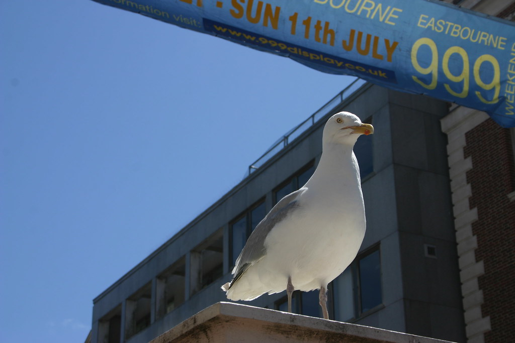 Eastbourne Welcome