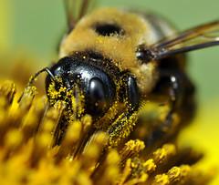 Pollen Picking