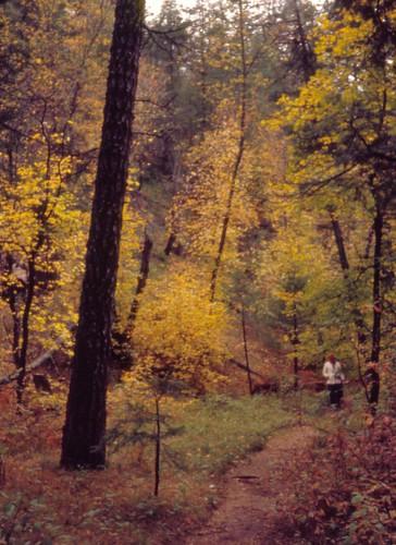 marshallgulch landscape skyislands mountlemmon arizona autumn nature olympuspenees halfframe ektachrome santacatalinamountains santacatalinas riparian riparianzone riparianarea riparianhabitat