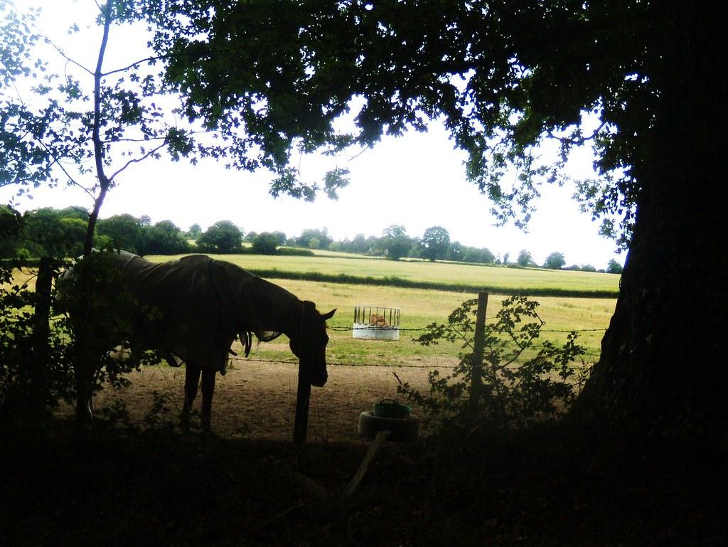 Horse Balcombe Round walk