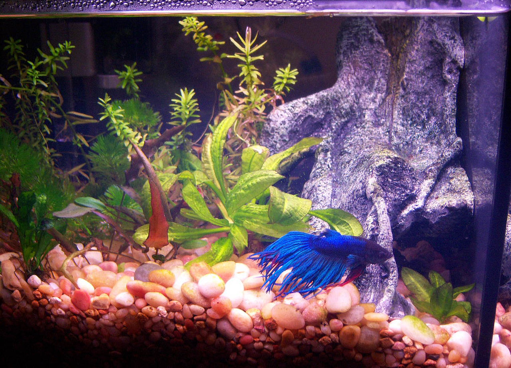 Petco bookshelf freshwater fish aquarium 28 images 6 6 for Petco fish tank decor