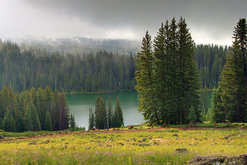 trees mist lake fog sunrise landscape colorado reservoir fir grandmesa