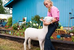 Sheep at the Fair