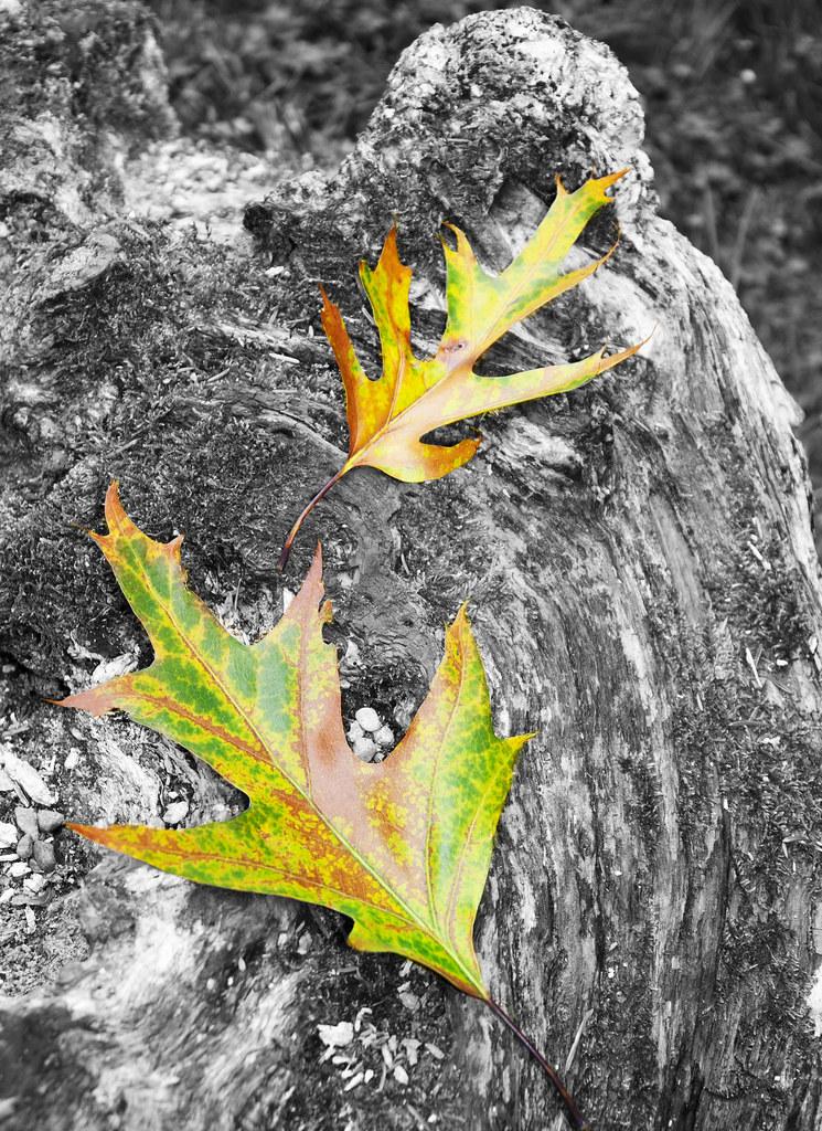 Autumn is around the corner...