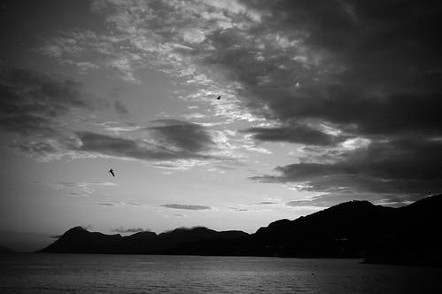 ocean sunset blackandwhite bw norway evening nikon nikond70 dusk seagull molde lenegunvaldsen