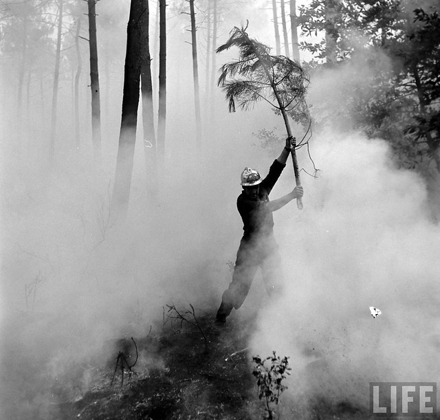 Bordeaux Forest Fire 1949, by Dmitri Kessel