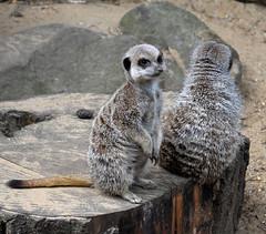 Banham Zoo - August 2010