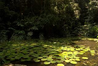 Εικόνα από Penang Botanical Gardens. gardens botanical penang