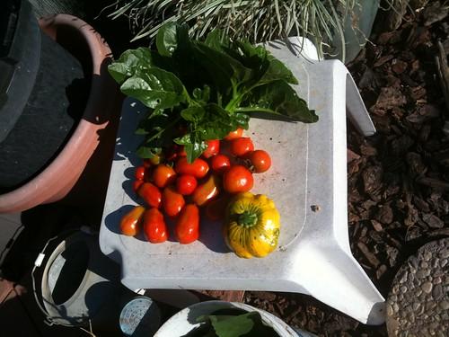 Organic Gardening - organic foods
