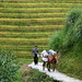 Longsheng Rice Terrace, Guangxi, China 龍勝棚田