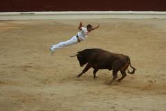 animal sports, cattle-like mammal, bull, tradition, sports, bullring, entertainment, cattle, matador, bullfighting,