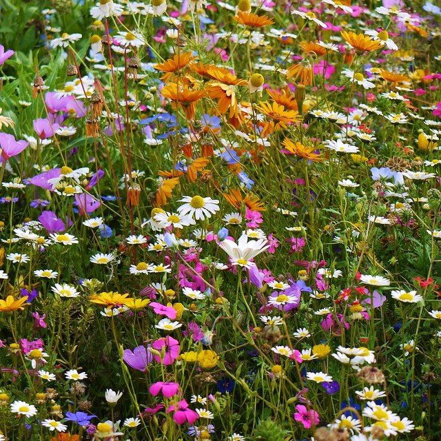Wildflower Bed And Breakfast On The Square