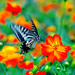 Butterfly in Kodachrome 64 by niji graphein