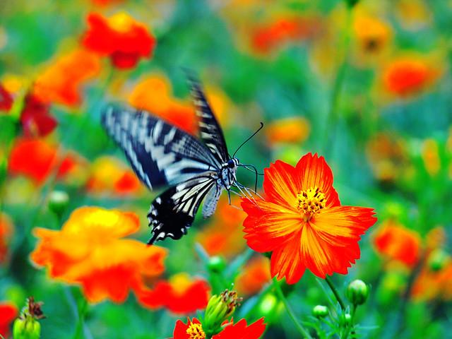 Butterfly in Kodachrome 64