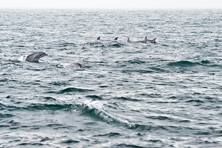 August 2010, Joined by a pod of dolphins