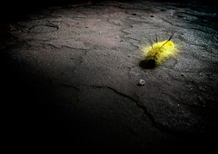 Photograph: Caterpillar again